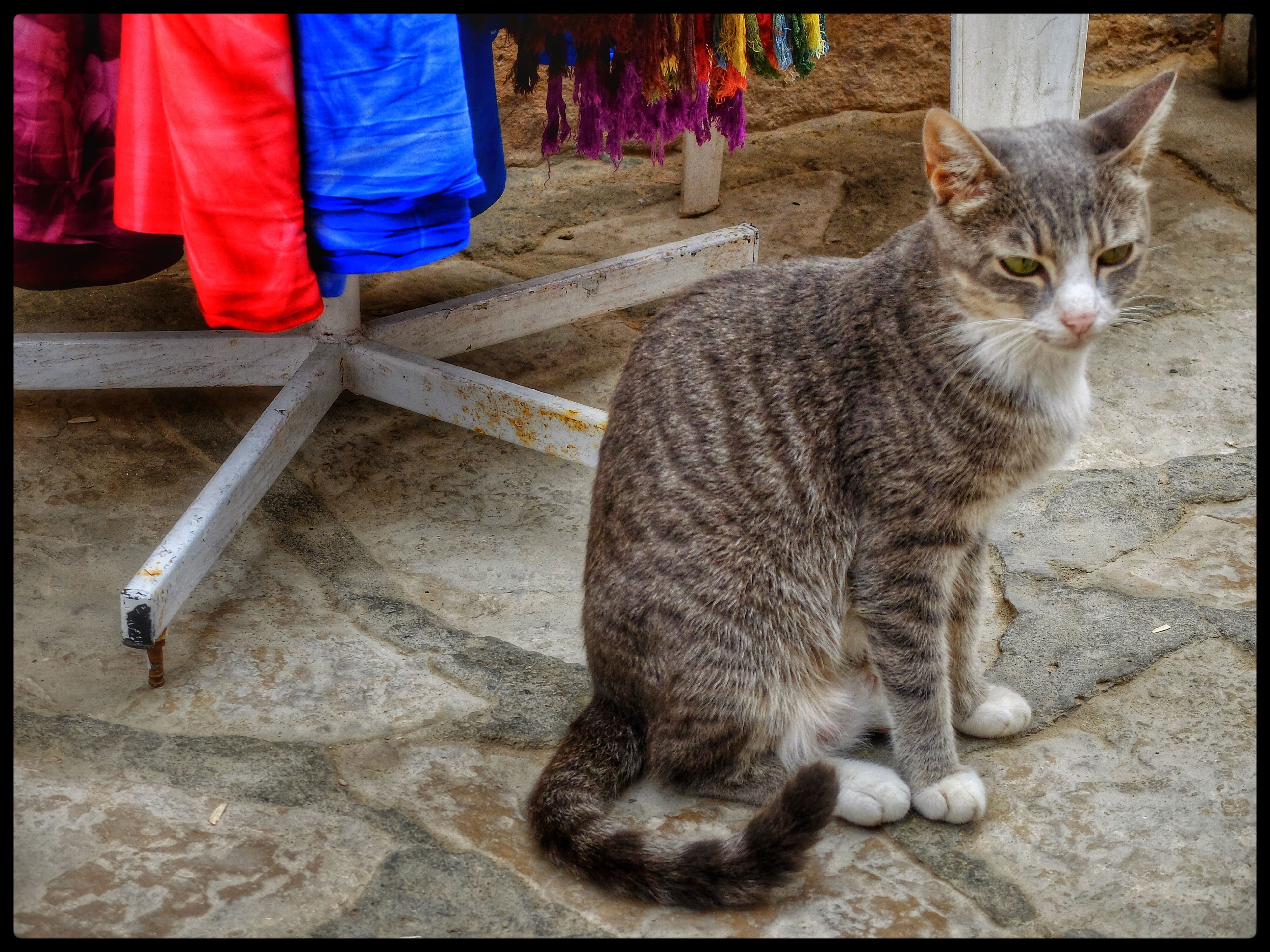 domestic animals, pets, animal themes, one animal, mammal, transfer print, domestic cat, cat, auto post production filter, standing, full length, low section, men, walking, feline, lifestyles, person, pet owner
