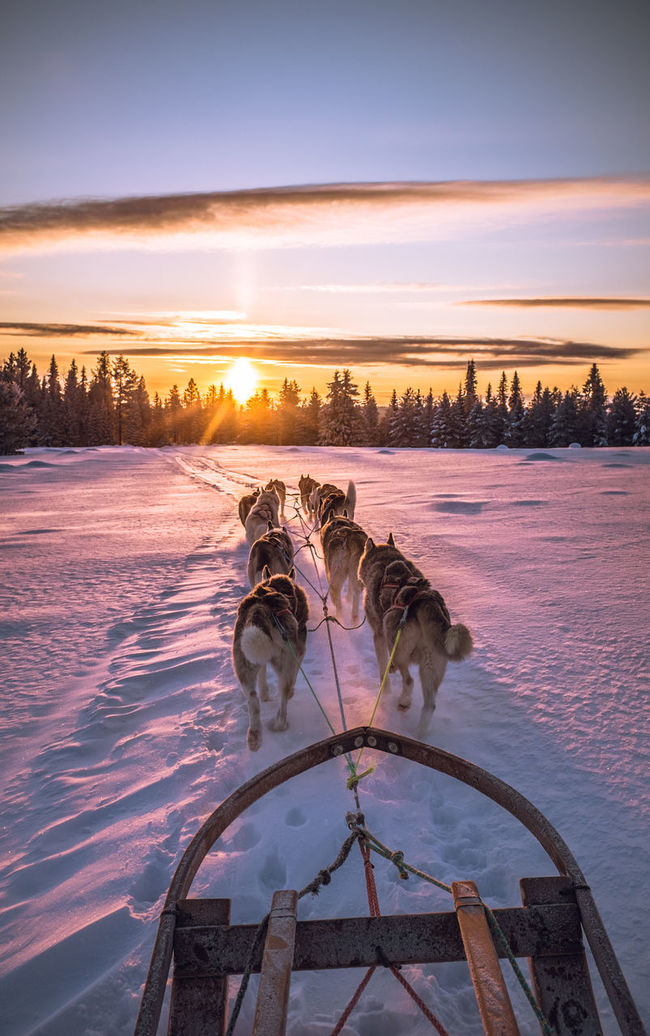 Showcase: January Sleddog Dog Sledge Dog Winter Adventure Cold Winter ❄⛄ Sled Dog Mush Camp Dog Sled Musher Sunset Husky Wintertime Eyem Nature Lovers  Winterwonderland Winter Wonderland Clouds And Sky Dog Sledding Dogs Mush Dog Cold Temperature The Great Outdoors - 2016 EyeEm Awards Snow Snow ❄