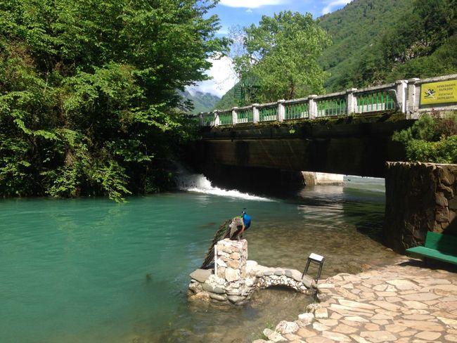 Абхазия странадуши
