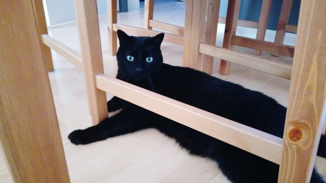 Domestic Cat Indoors  Pets No People Sliding Door Day Black Cats Are Beautiful Wooden Chairs And Table Huawei P9 Plus Photography Made By Noesie