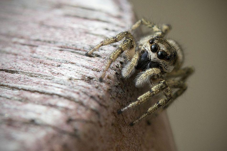 Beautiful stock photos of spider's, Animal Eye, Animal Leg, Animal Themes, Animals In The Wild