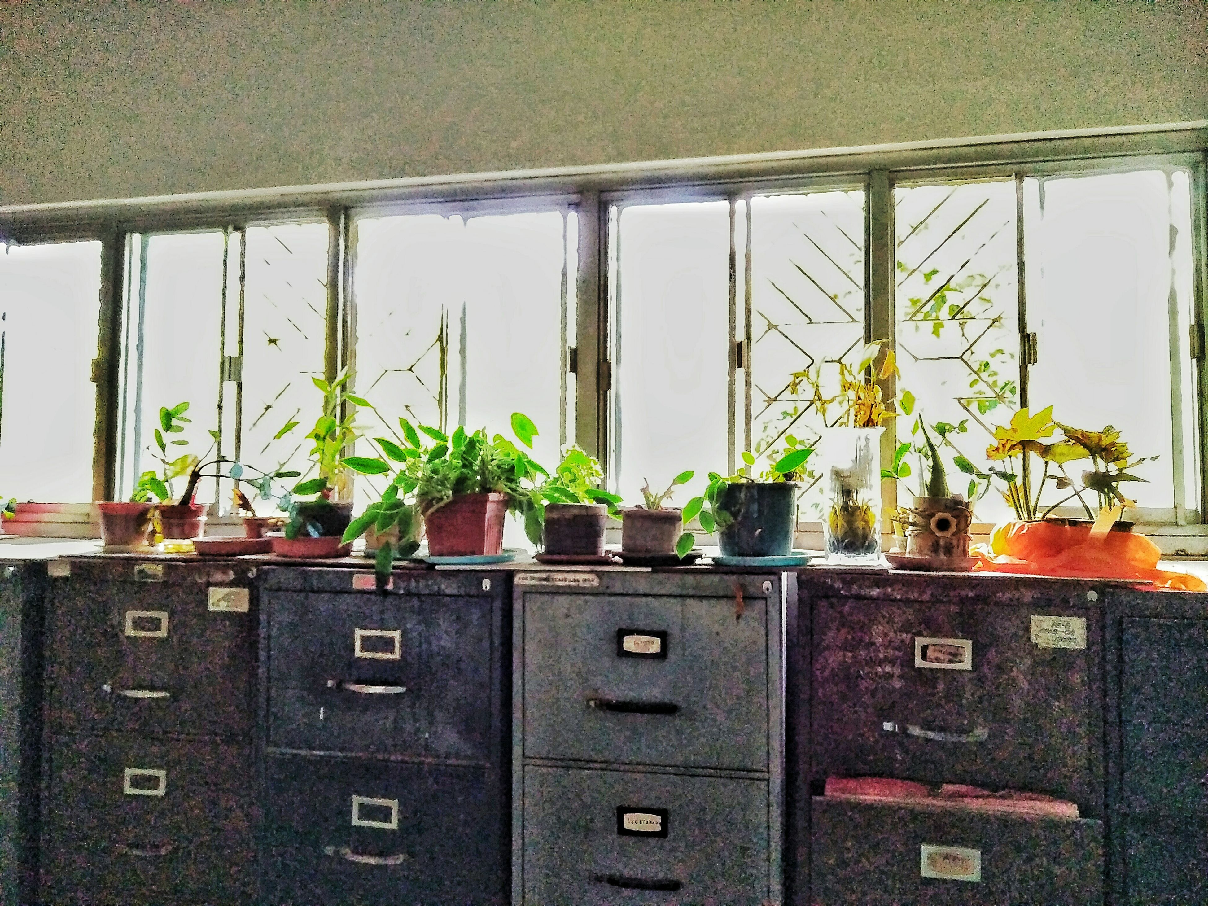 potted plant, window, indoors, growth, plant, geometric shape, day, green color, rectangle, no people, fragility, formal garden