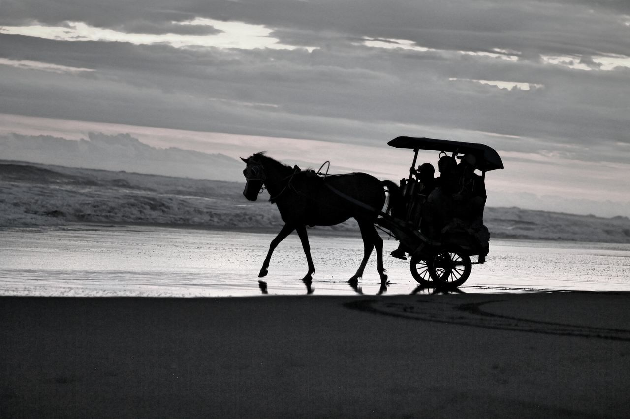 Sado Delman Horse Photography  Beach Photography Parangkusumo Parangtritis Sun Set On The Beach  Sunset Silhouettes Beautiful Indonesia EyeEm Selects EyeEm