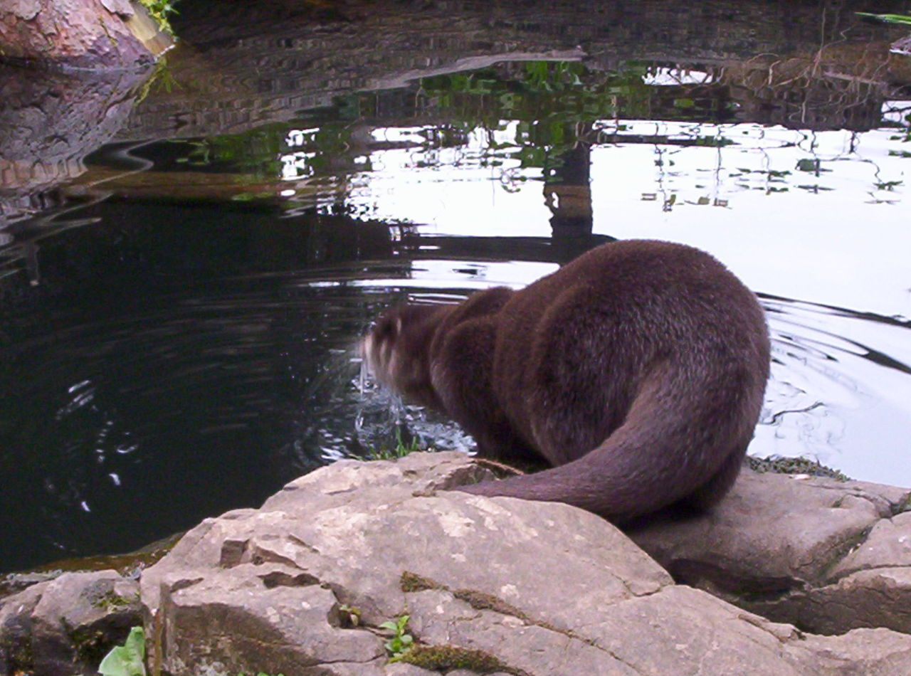Animal Themes Otters Outdoors Water