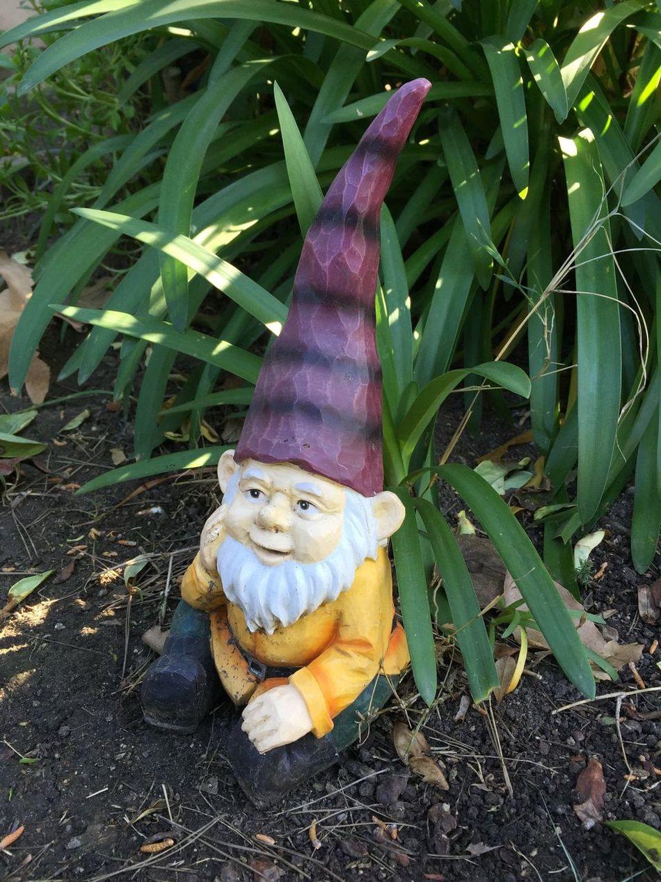 Day Garden Good Luck Good Luck Symbol Knomes Leprachaun Leprechaun Luck Lucky Nature No People Outdoors Plant Dwarf Dwarves Figurine  Figurines  Gnomes Gardens Plants Leprechauns Gnome Garden Gnome Garden Gnomes Garden Gnome