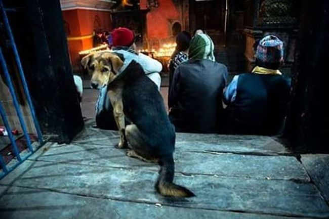 3 and a half men. Banglamukhi Colorsofnepal Nepalphotoproject Dktm Colorsofnepal Kathmandu Locals Dogs