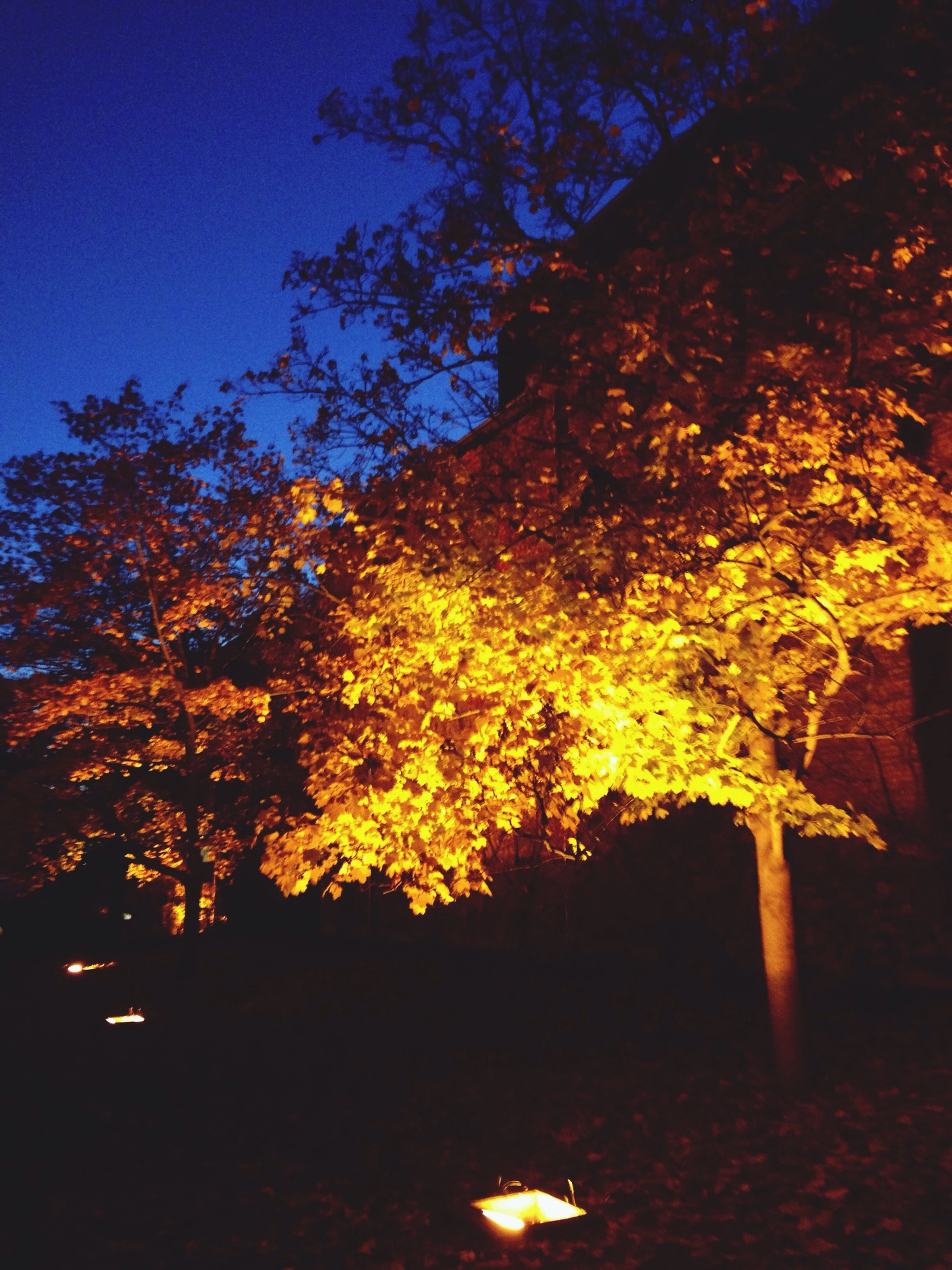 tree, night, orange color, low angle view, growth, sunset, nature, branch, sunlight, silhouette, illuminated, clear sky, tranquility, outdoors, no people, beauty in nature, shadow, autumn, built structure, yellow