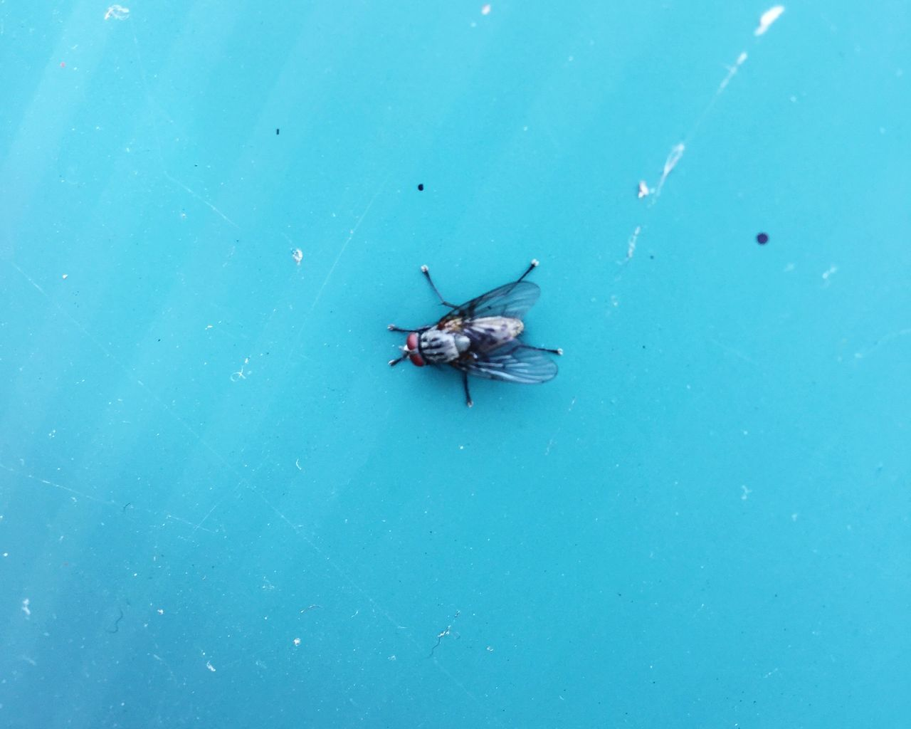 insect, one animal, animal themes, animals in the wild, high angle view, blue, no people, day, animal wildlife, outdoors, nature, close-up