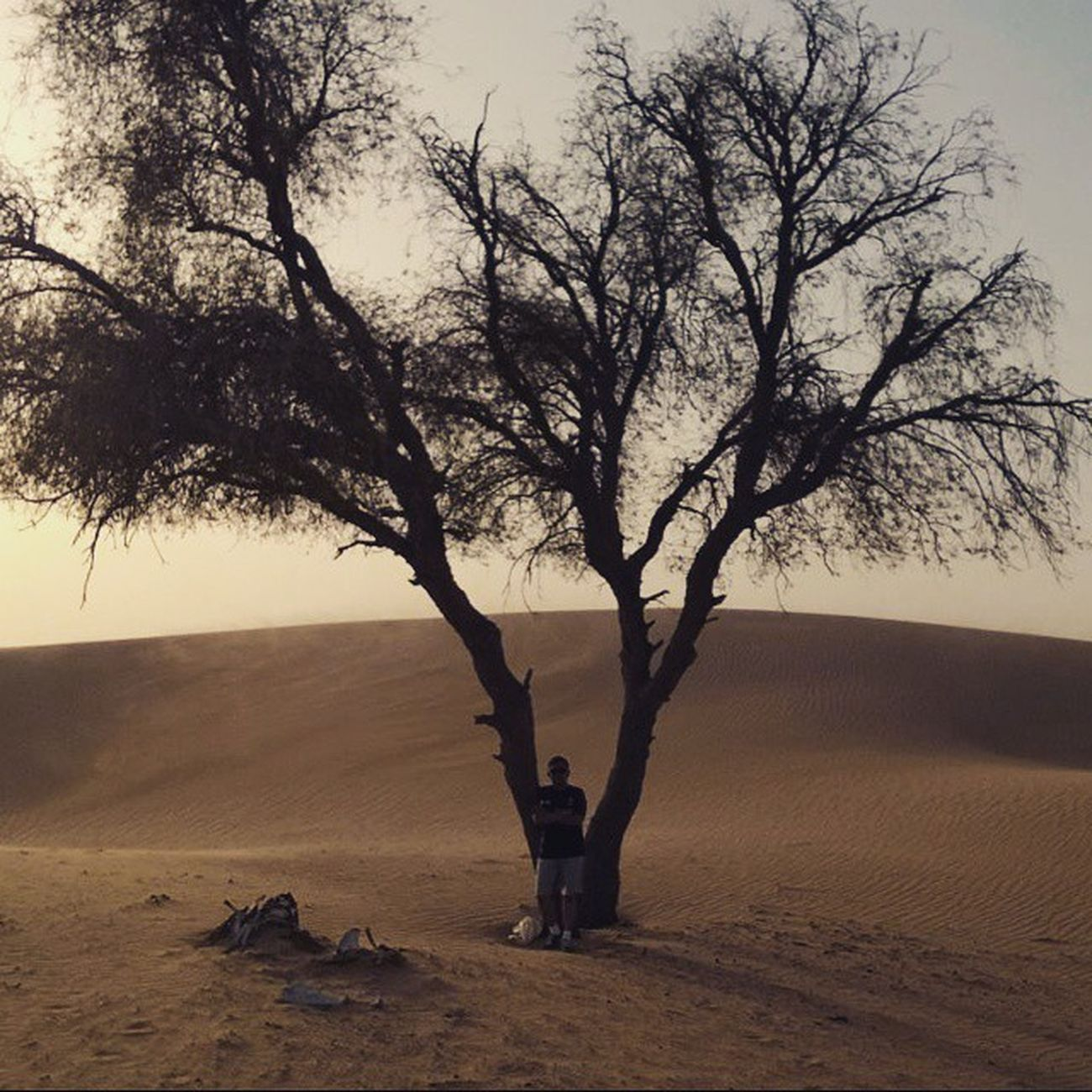 Somewhere on the desert.. Desert Desertour Sand Abudhabidesert Sunset Sunshine Tree Bluesky Hotday Hotweather Tourist Tour Tourist Trip Mytrip Abudhabi UAE Unitedarabemirates Instaandroid Instadroid The Great Outdoors - 2016 EyeEm Awards