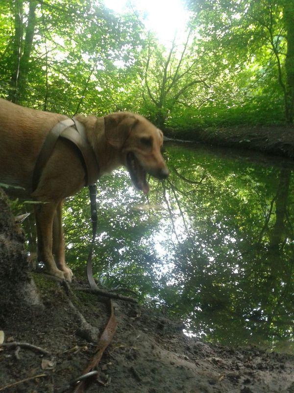 Kleine Pause Hunderunde Water Reflection Dogs Of EyeEm Dog❤ henry