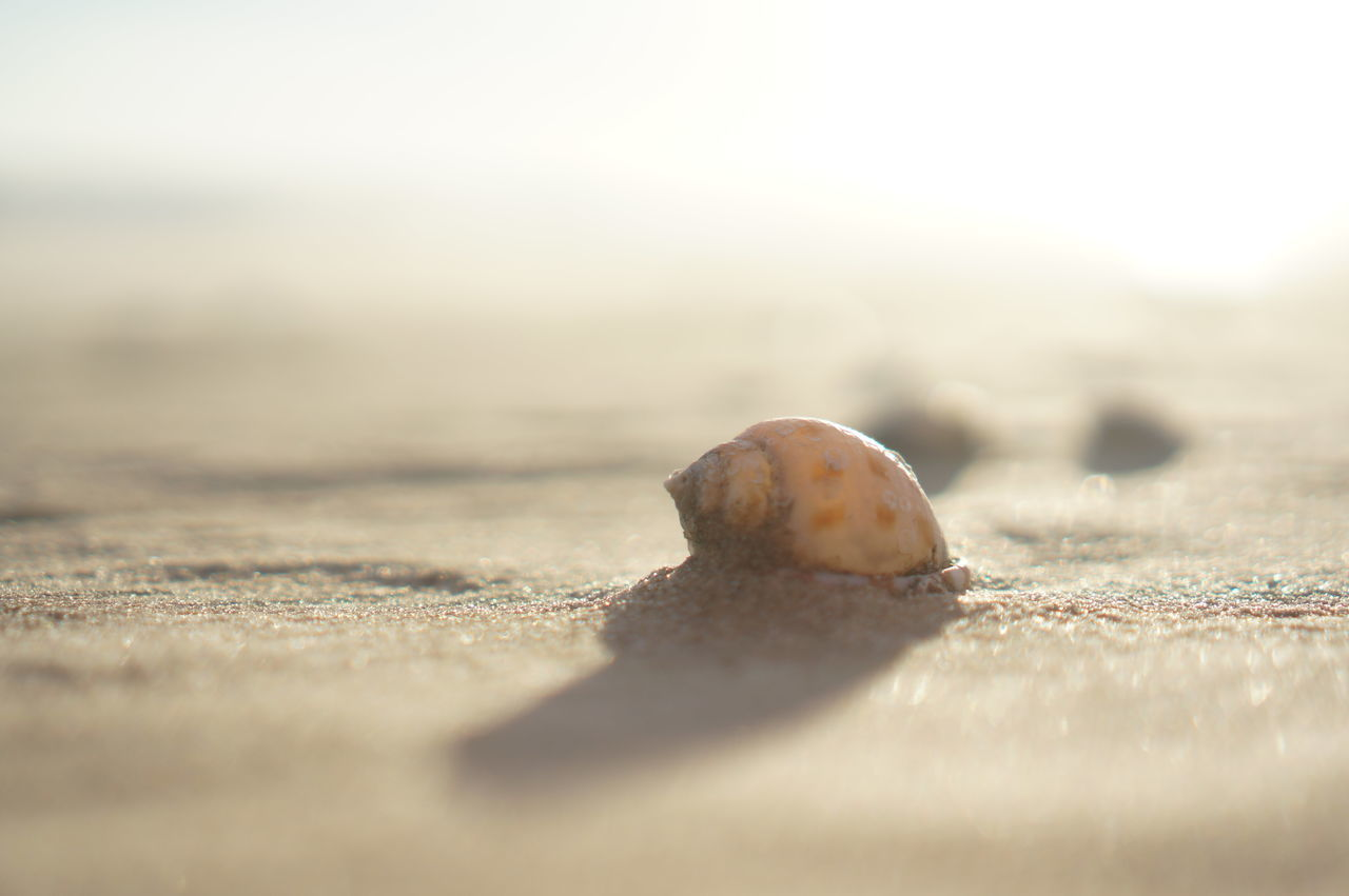 Animal Themes Animals In The Wild Beach Close-up EyeEm Nature Lover Hermit Crab Nature Sand Sea Sea Life