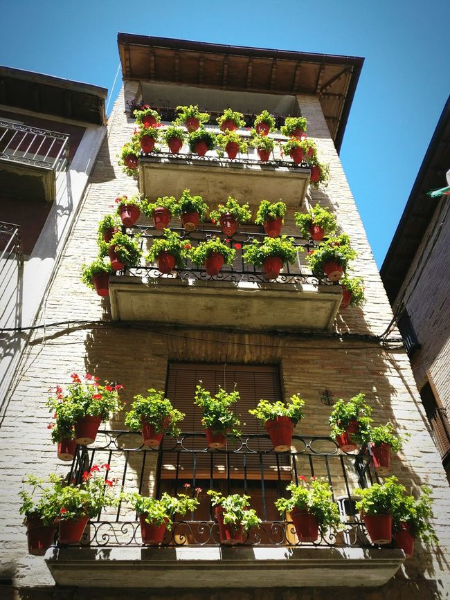 Gardening SPAIN Flower Photography Green Freshness Sun Casa