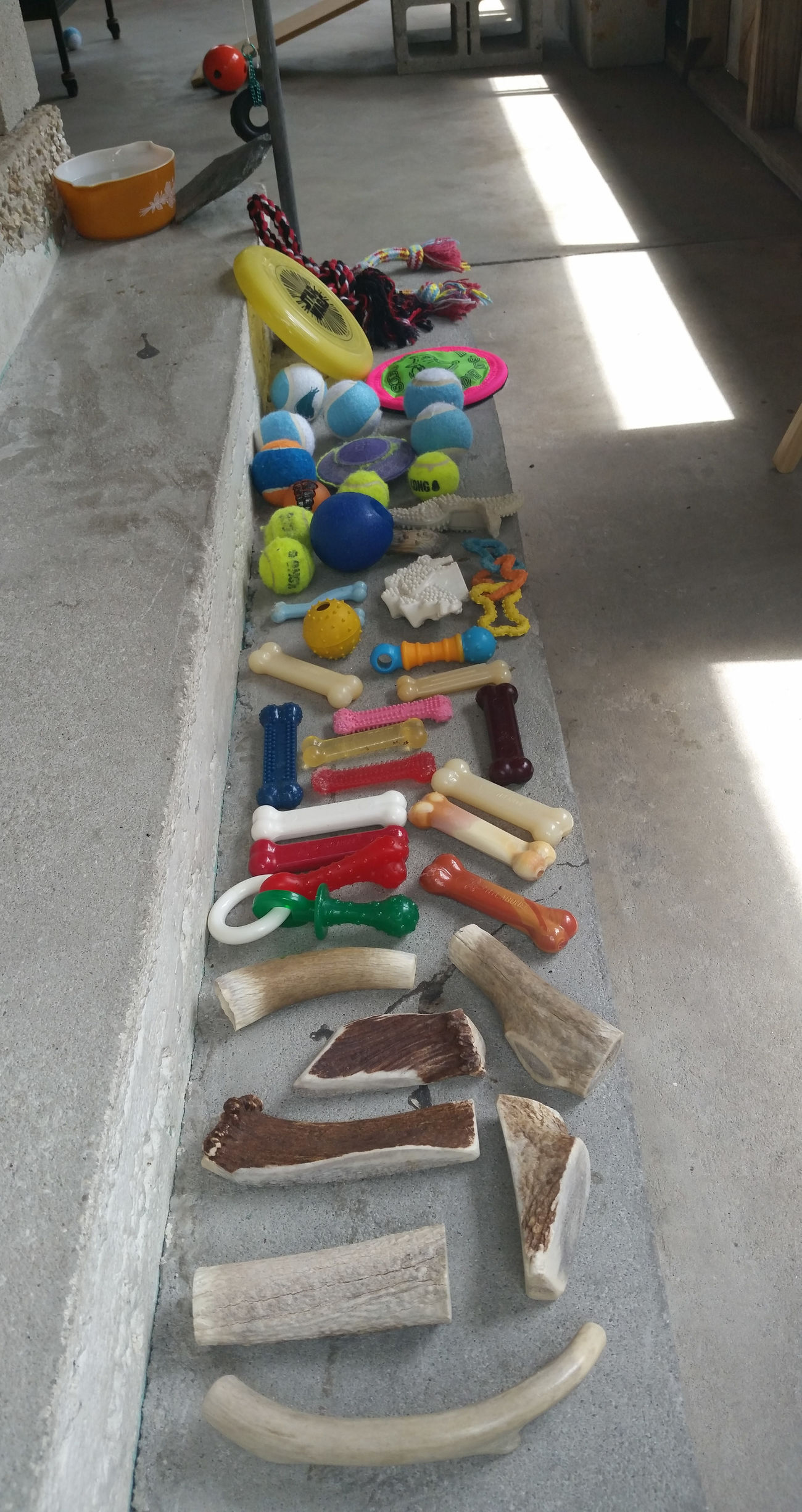 Dog Toys Multi Colored Front Porch Step My Dogs Are Cooler Than Your Kids Live Oak Animal Hospital Odie Cu-Jose Spoiled Dog Chihuahualife Chihuahuas Of Eyeem Chihuahua Puppy Rat Terrier Dog Named Kat Kilo