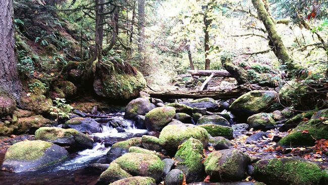 Forest Nature Pacific Northwest  Where Fairies Live Never Never Land HCII Photos Hiking Stream Falls