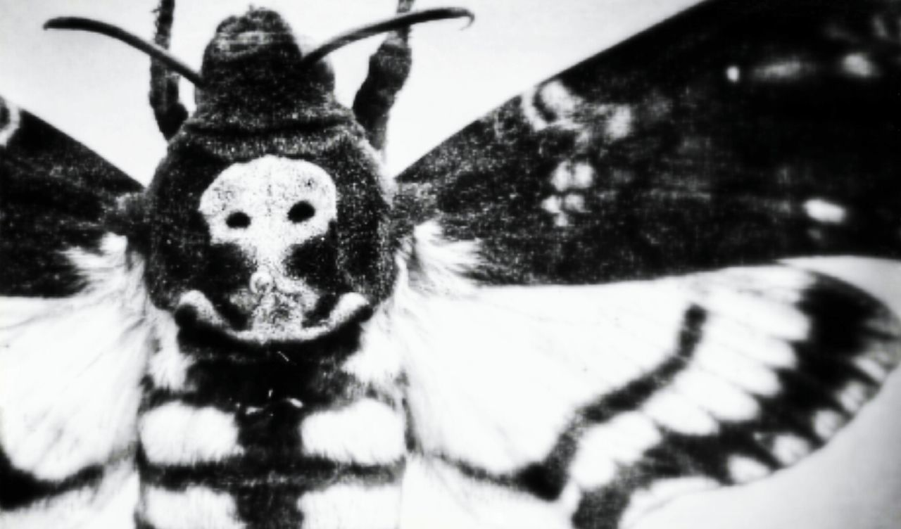 Death III Animal Themes One Animal No People Close-up Black & White Monochrome Collection Monochrome Photograhy Black And White Photography Taking Photos Death By Life Mypointofview Tranquility Dead Monochrome Photography Monochrome _ Collection Death Skeleton DeathsHead Moth Acherontia Atropos Atroposdeath Animalportrait