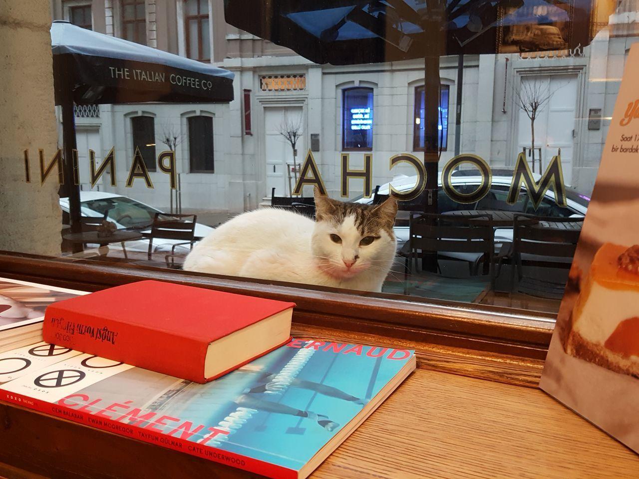 Pets Domestic Cat Domestic Animals Animal Themes Cat EyeEmCatlovers EyeEm Cat Cats Of EyeEm