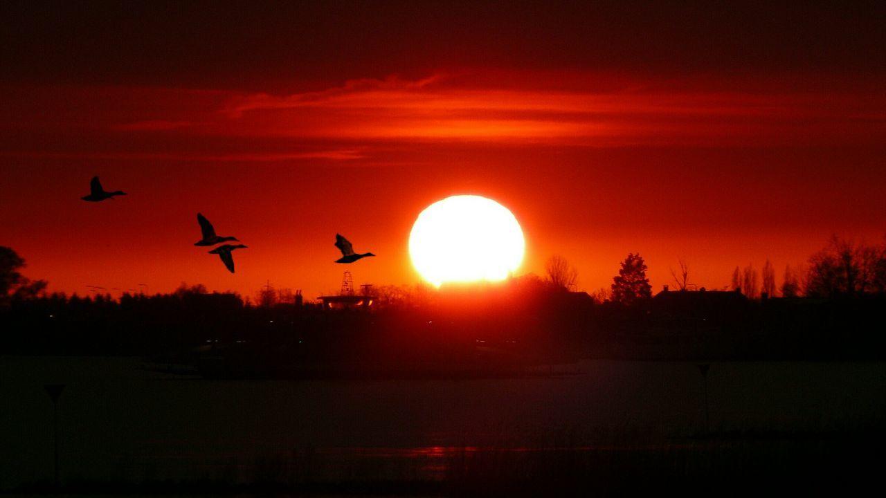 Bloodredsky Silhouettes Ducks In Flight Bloodred Sunset Bloodredsun