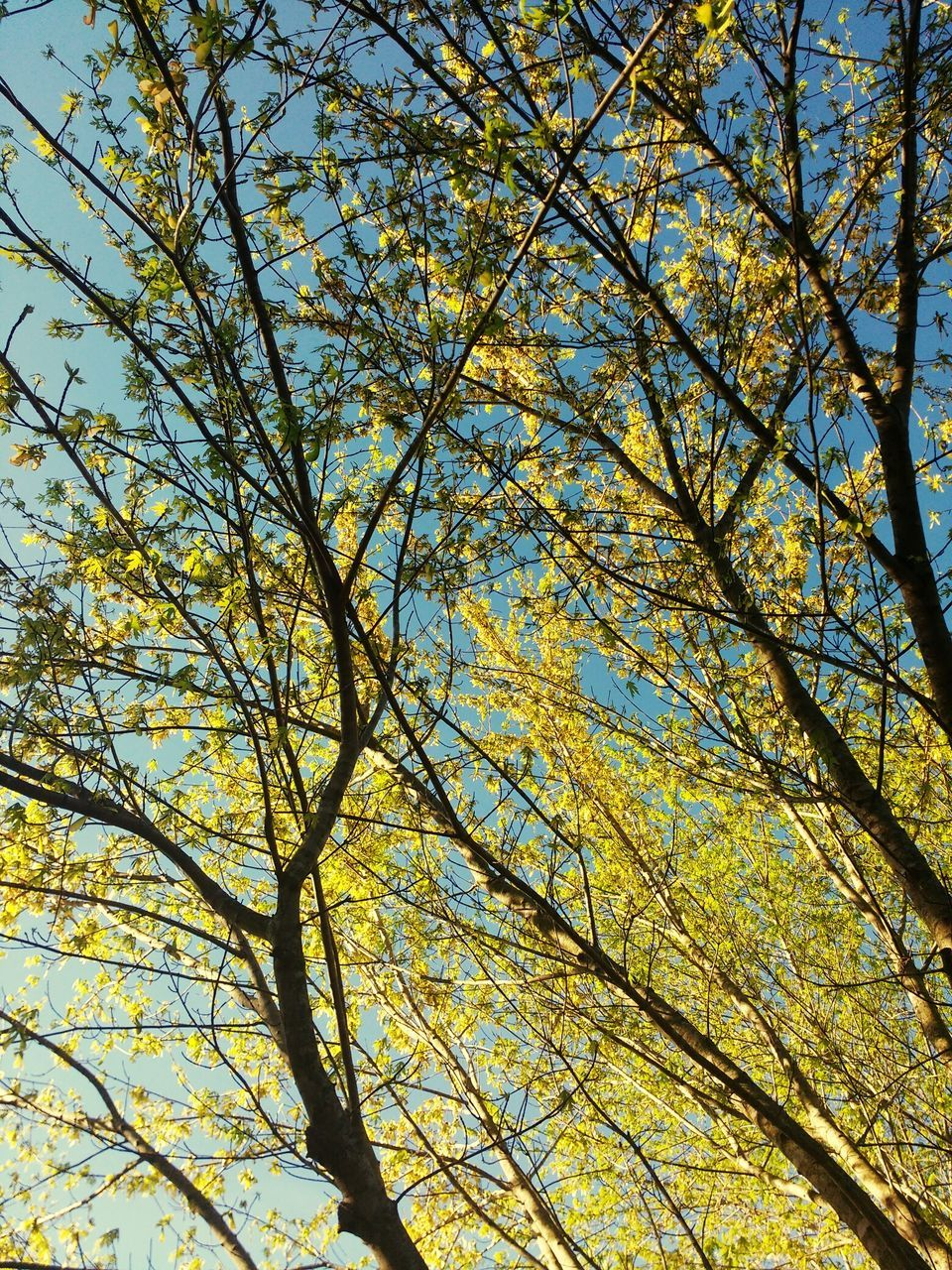 branch, tree, nature, growth, autumn, beauty in nature, low angle view, full frame, backgrounds, day, no people, outdoors, tranquility, yellow, flower, sky, freshness, fragility, close-up