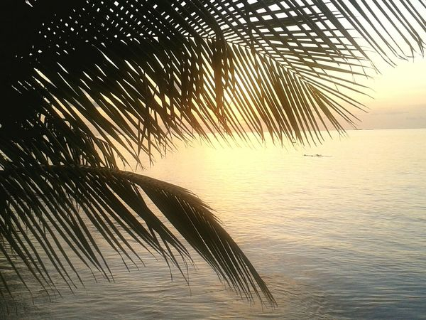 Sunset Vilamenhoo Island, Maldives Palm Trees Tropical Paradise Tropical Plants Holiday Beautiful Surroundings Natural Beauty! Landscapes With WhiteWall