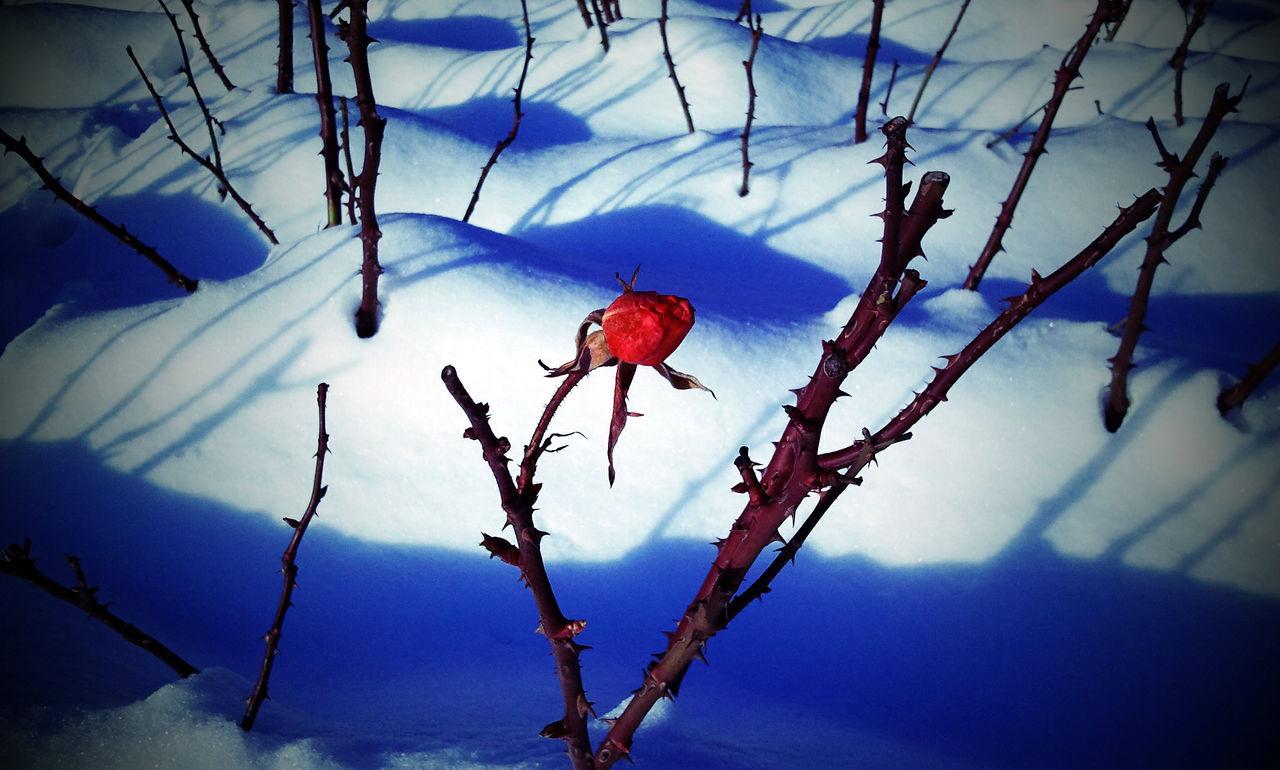 Beauty In Nature Flower Flower In Snow Nature Snow Winter Winter Flower  Winter Flowers EyeEmNewHere The Week On EyeEm
