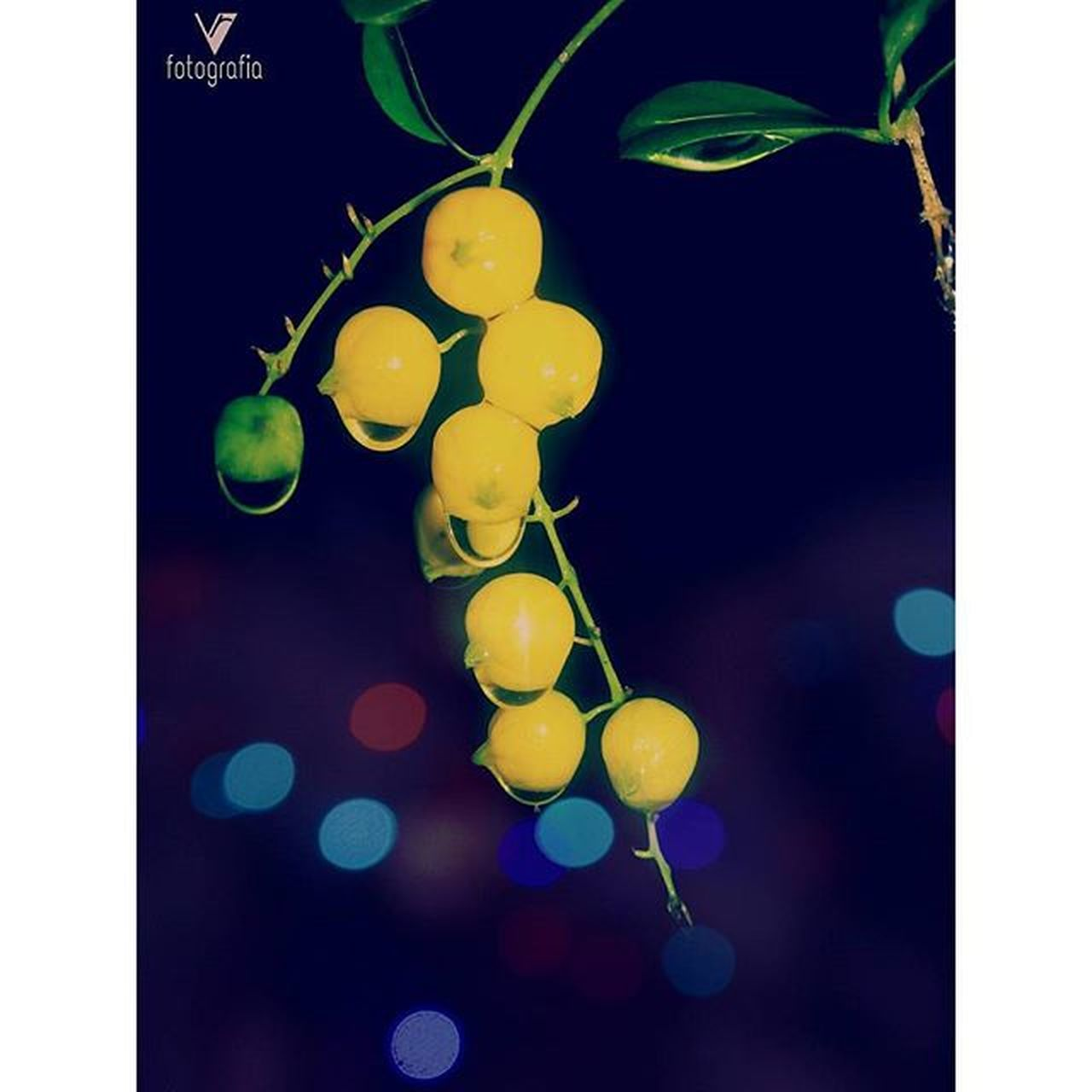 I don't knw her name 👈... BT she reminded me of my Childhood 👲... When we used 2 play with these yellow beauties... 😀 Yellowish Nightsnap Bokeh_effect Lights Waterdtops Malluink Instanight Picoftheday Likes4likes Samsunggalaxys3 Mobilephotography Afterlight Instamood Instadaily Instalike Mallugram Mallu Igs