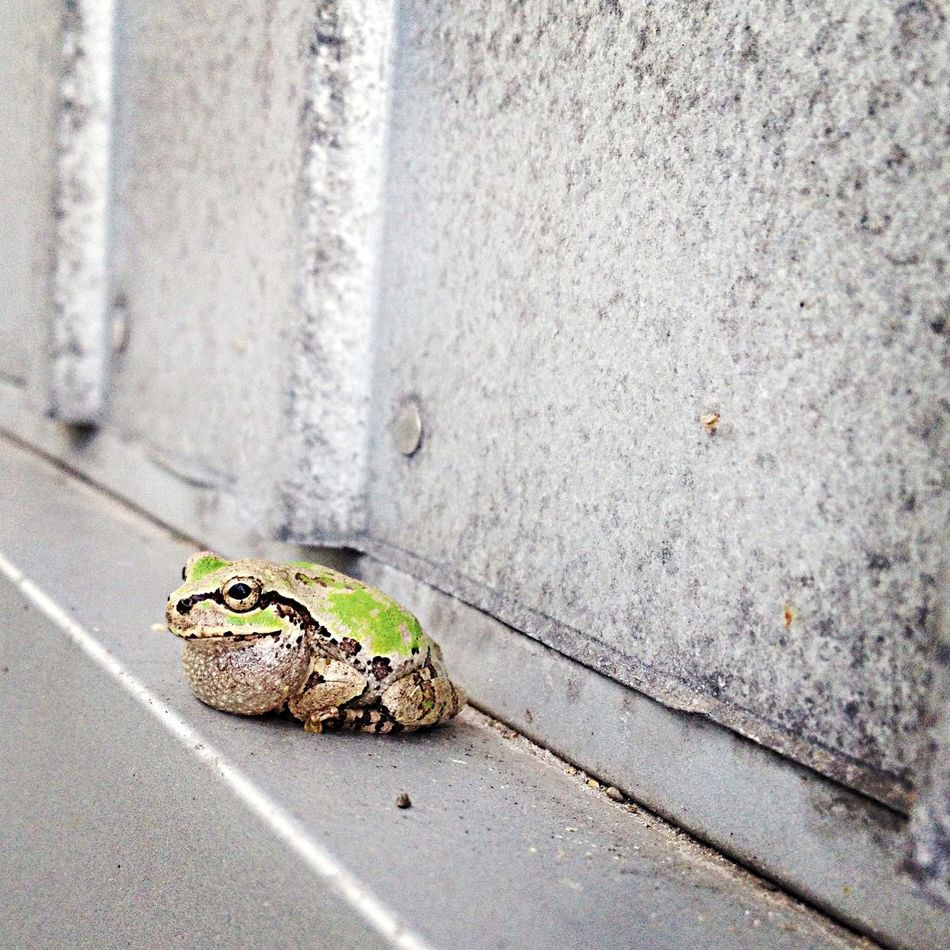 Beautiful stock photos of frog, Amphibian, Animal Themes, Animals In The Wild, Beauty In Nature