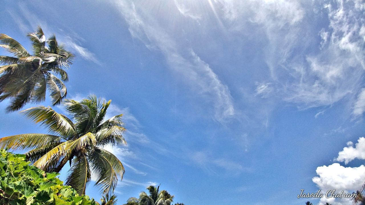 sky, palm tree, cloud - sky, low angle view, nature, tree, day, beauty in nature, scenics, no people, growth, blue, tranquility, outdoors