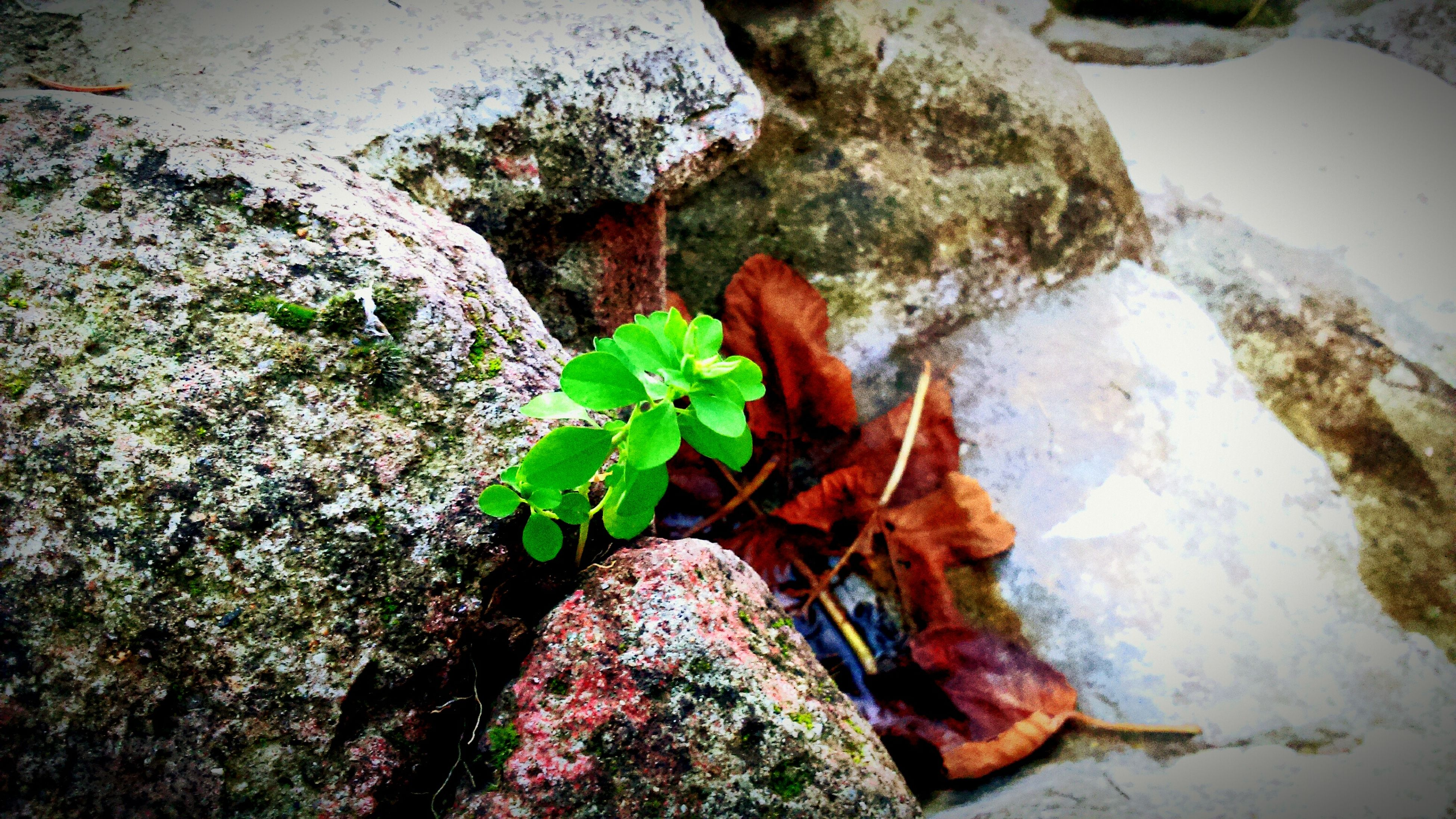 rock - object, growth, plant, high angle view, nature, leaf, moss, beauty in nature, rock, rock formation, tranquility, green color, growing, close-up, day, outdoors, stone - object, flower, no people, textured
