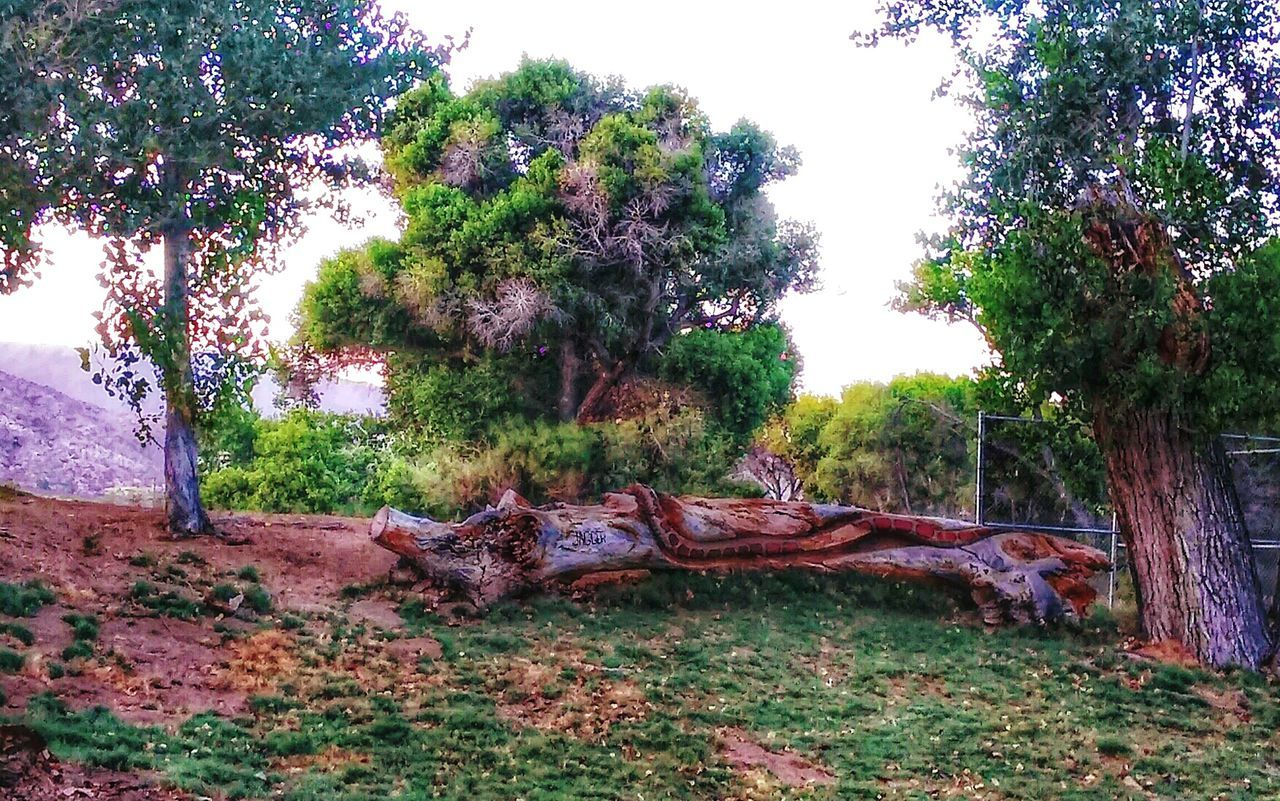 Check This Out Landscape_photography Hiking❤ Morongopreserve . Seeing Things Check This Out from afar...I thought there was a snake on the tree trunk...just my imagination...thank goodness!
