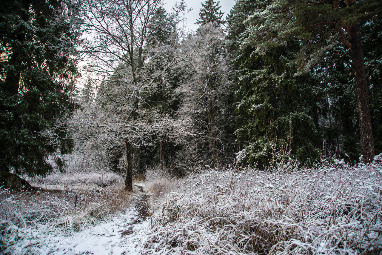 Mon Repos (Vyborg) https://en.wikipedia.org/wiki/Mon_Repos_(Vyborg) Beauty In Nature Cold Temperature Day Dried Plant Forest Grass Growth Nature No People Outdoors Scenics Sky Snow Spruce Tree Tranquility Tree Winter Woods