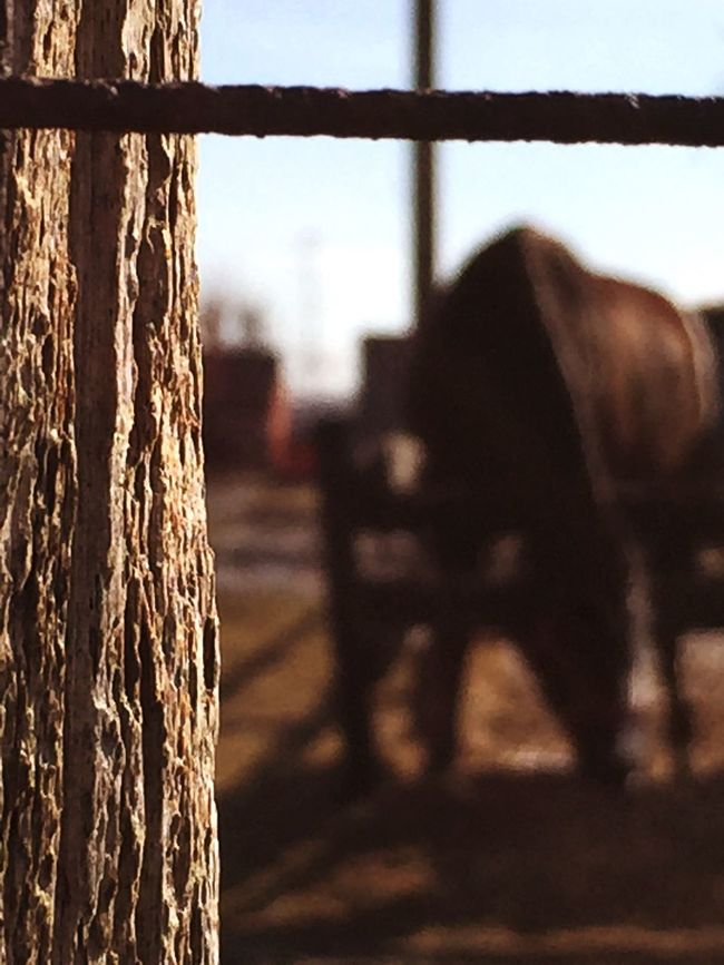 Background Defocus Background Blurred Background Blurred Motion Blurred Photos. Blurredbackground Horse Horses Barn Wooden Wooden Texture Horseeating Brown Brownhorse Taking Photos Photographer Photography Photo VSCO Cam VSCO Vscocam Farm Animals Farm Farm Life Farmland