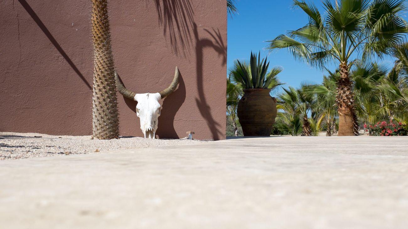 Skull Cow Skull Mexico Ranch Desert