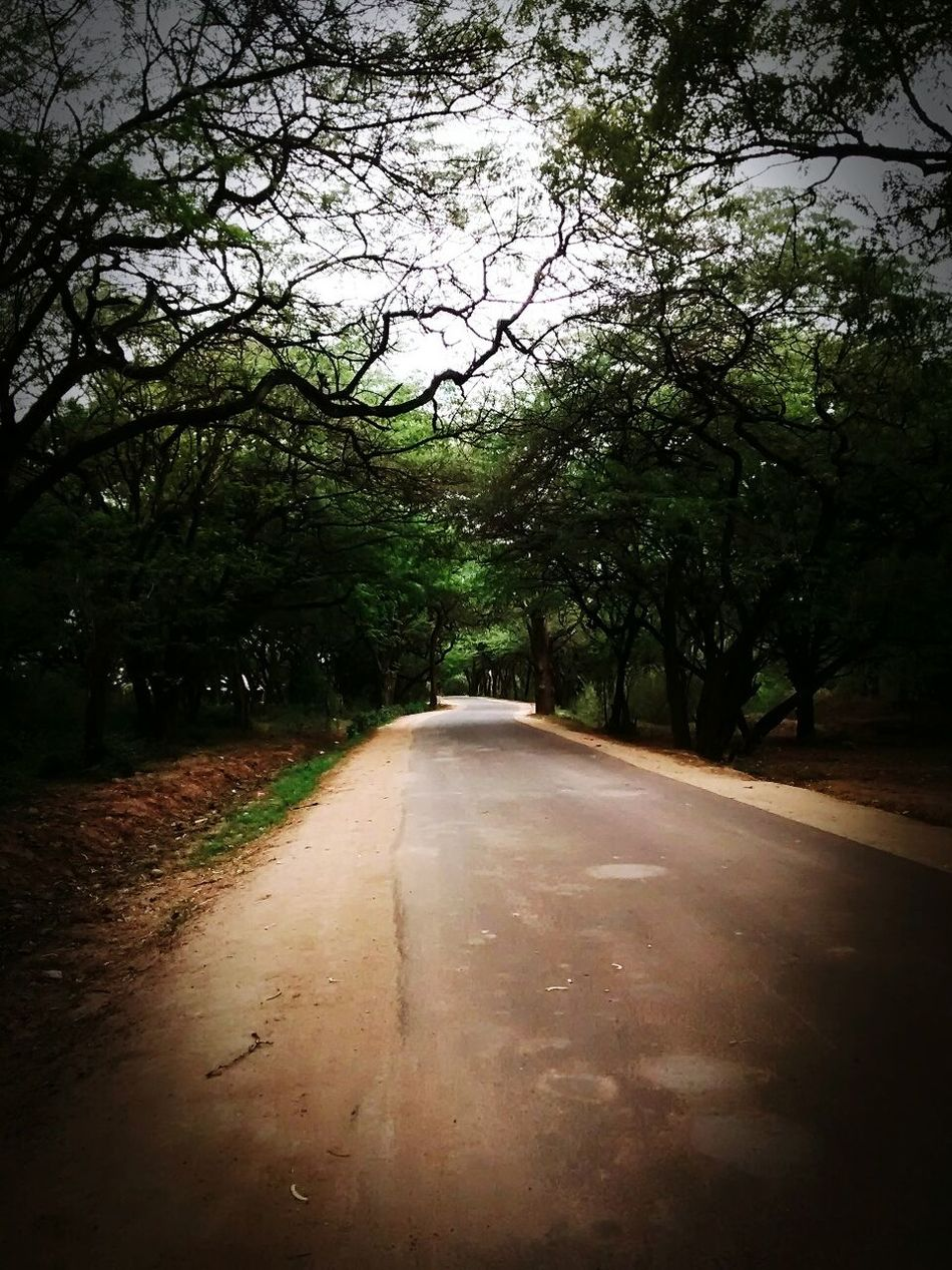 The lonely road over the green park. Nature Green Hands in Isha Yoga Center, Coimbatore, Tamil Nadu, India