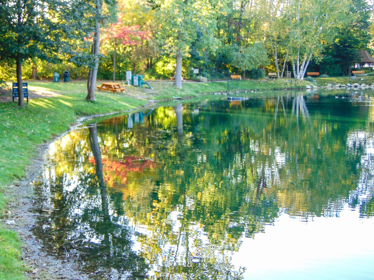 reflection, water, tree, nature, beauty in nature, autumn, tranquil scene, outdoors, tranquility, lake, scenics, grass, park - man made space, day, waterfront, leaf, no people