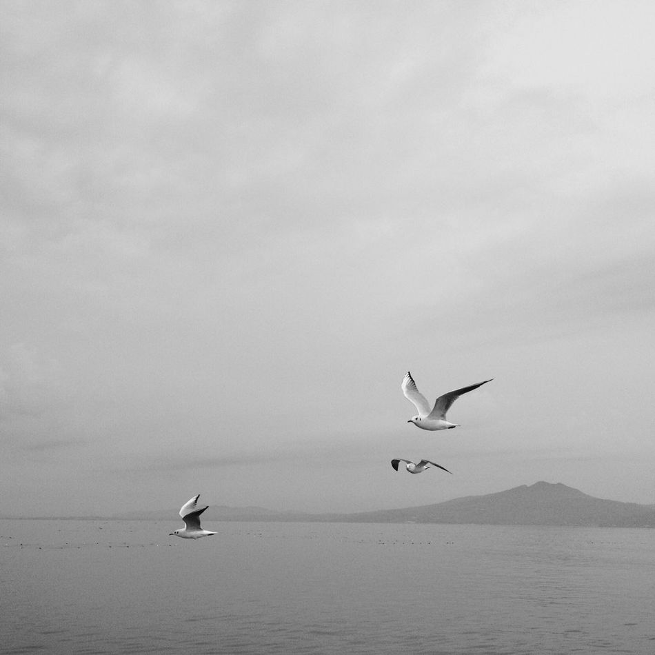 Seagulls in flight Monochrome Tranquility Black And White Nature Seagull In The Air Birds Tranquil Scene Seagulls In Flight Sea Clouds And Sky IPhoneography Beauty In Nature Sky Scenics Spread Wings Flying Clouds Ferry Views Calm Sea Day Japan