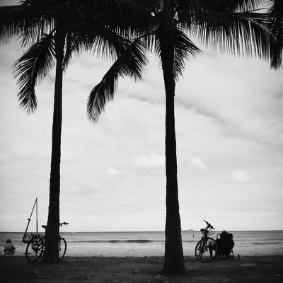 blackandwhite in Honolulu by me_lv
