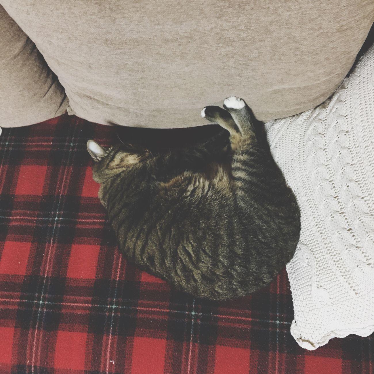 Animal Themes I Love My Cat My Cats Cat♡ Cat Cats 🐱 One Animal Pets Animal Animals Indoors  Cats Of EyeEm Domestic Cat Domestic Animals