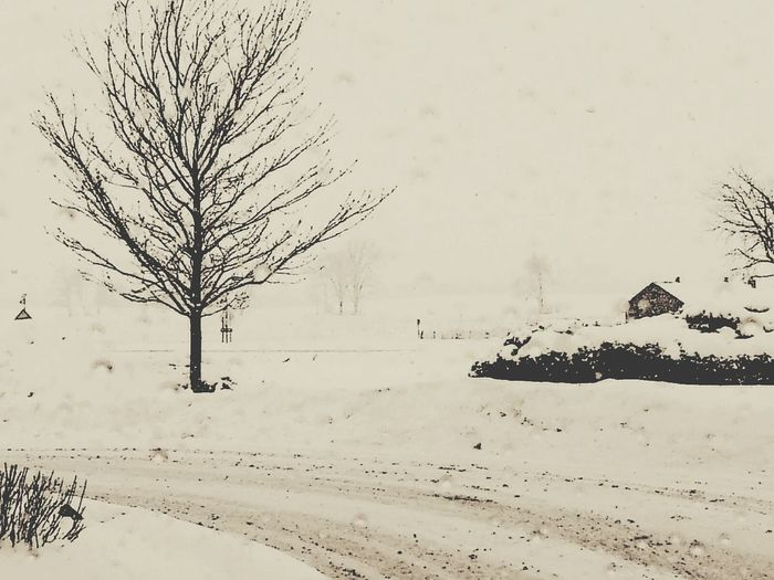 Eyeemtreearchitecture Winter 2013-2014♥ Eye Em Snowscapes Eyeem Snow