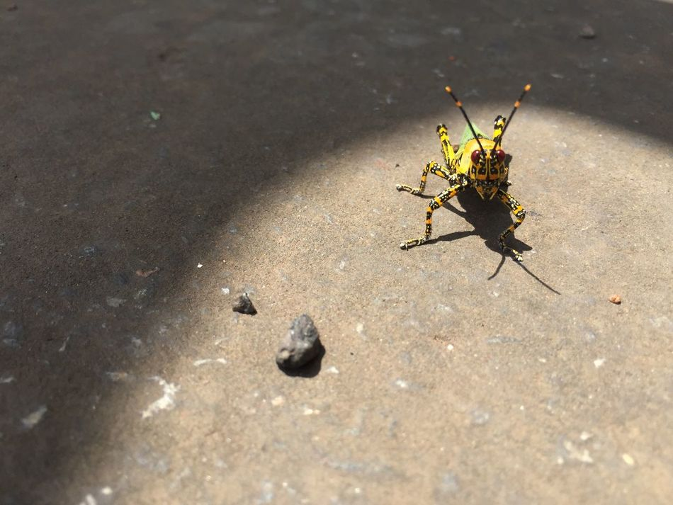 First Eyeem Photo Grasshopper