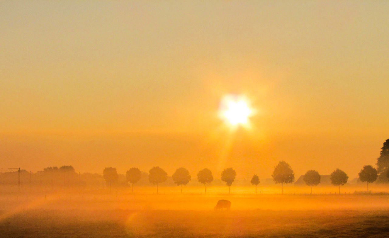 Mist Foggy Foggy Morning Sunrise Nature Sunset Beauty In Nature Yellow Idyllic Tree Tranquil Scene No People Rural Scene Silhouette Tranquility Dramatic Sky Landscape Outdoors Scenics Sky Day Shadows & Lights Nature Sun Betterlandscapes