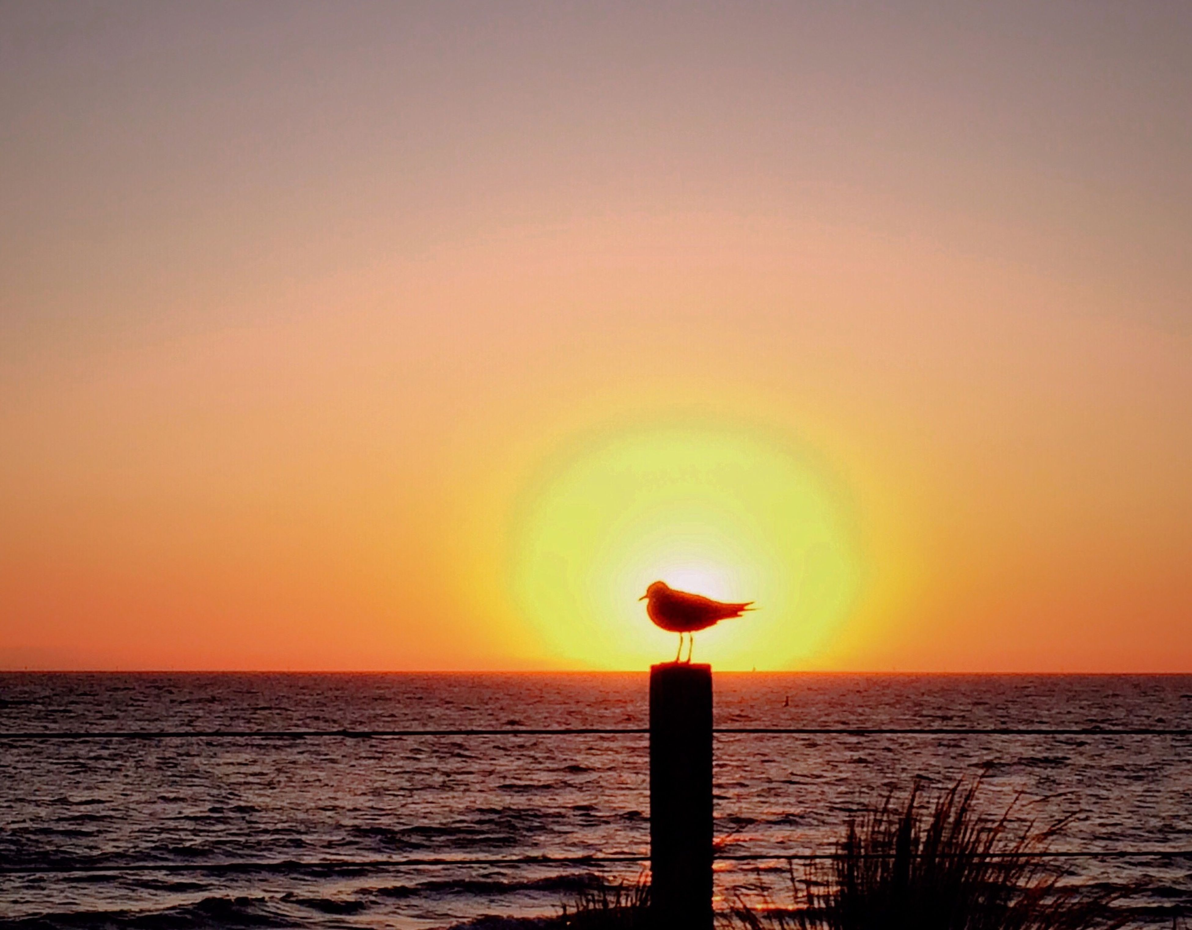 sunset, sea, water, horizon over water, sun, orange color, bird, one animal, animal themes, beauty in nature, scenics, animals in the wild, nature, tranquil scene, tranquility, clear sky, wildlife, copy space, waterfront, sky
