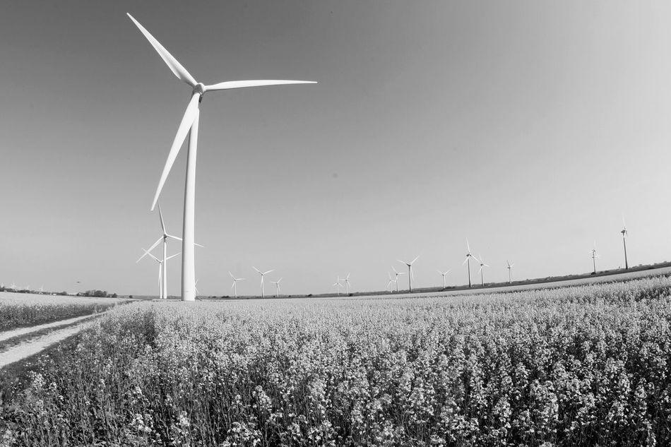 Wind Turbine Wind Power Alternative Energy Environmental Conservation Fuel And Power Generation Renewable Energy Weltblick Windmill Industrial Windmill Rural Scene Field Outdoors Day Technology No People Nature Landscape Sky Traditional Windmill Agriculture Scenics