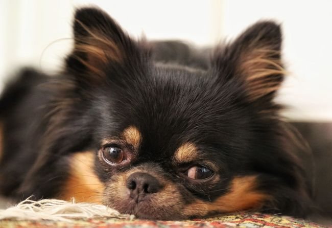 Nature Cute Pets Portrait Check This Out Eye4photography  Dog I Love My Dog