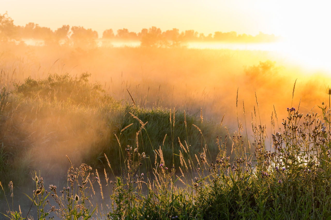 nature, field, grass, beauty in nature, growth, tranquil scene, tranquility, plant, outdoors, sunset, no people, scenics, sunlight, fog, landscape, day, sky