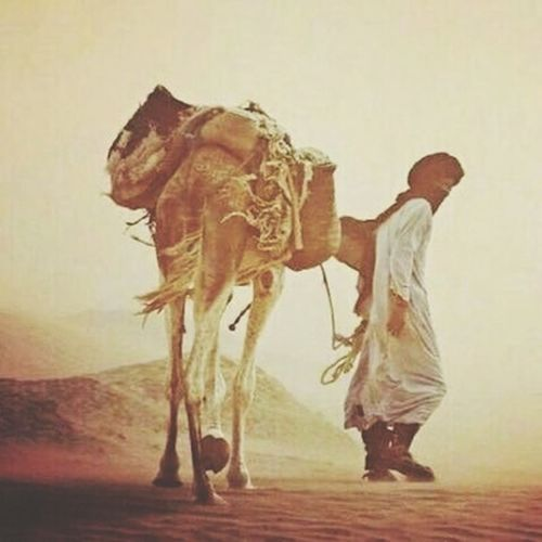 Dessert Cultures Arts Culture And Entertainment Men Animal Nature Arabian Culture Camels Camel Driver Camel Travel Travel Beautiful Pet Arabic Style History Historic Oldpeople Day Real People People Sahara Desert Jazirah Arabs Animal Wildlife