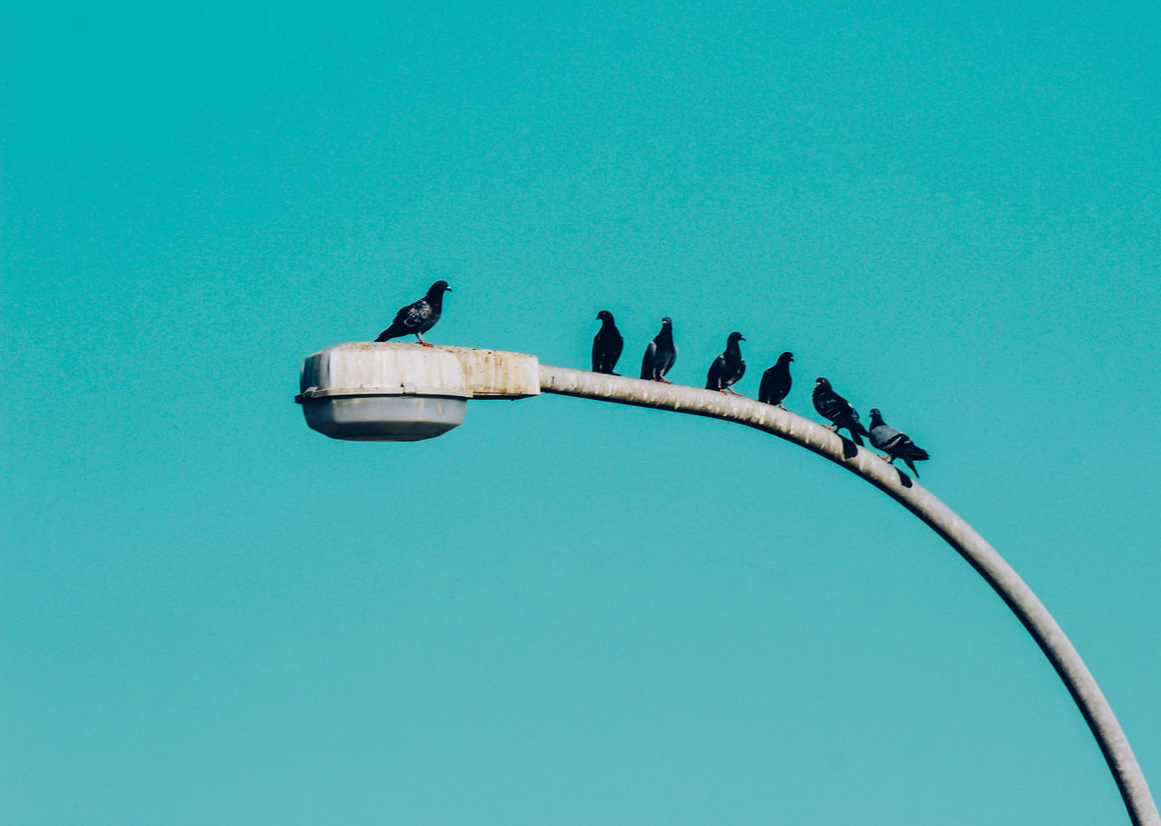 // lecture begins // Adapted To The City Amazing Animal Themes Bird Blue Blue Sky City Day EyeEm EyeEm Best Shots EyeEm Nature Lover Fade Low Angle View Minimal Minimalism No People Outdoors Perching Pigeon Shootermag Sky Street Streetphotography Urban Vibrant Color