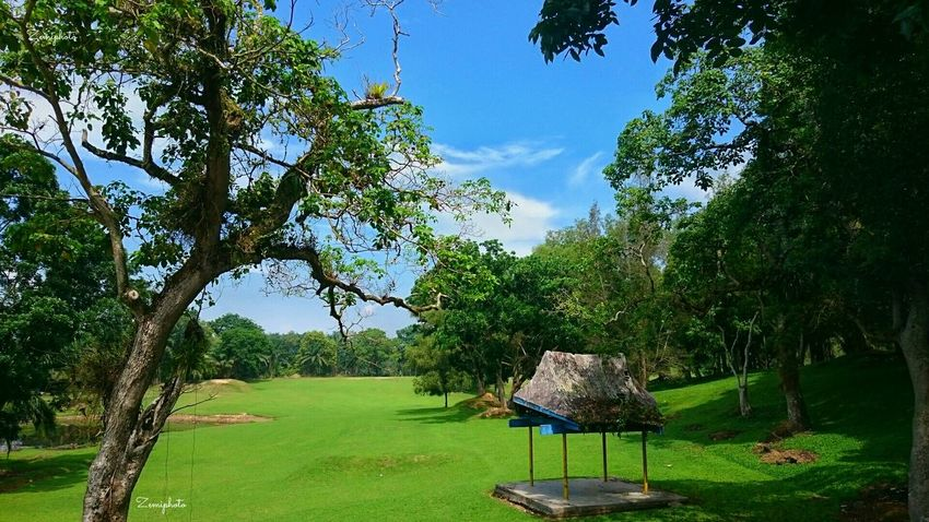 Golf Course Rencong Golfcourse Golf Acehtamiang Rantau Green Nature Smartphonephotography Landscape_photography SonyXperiaZ3Compact Zemiphoto