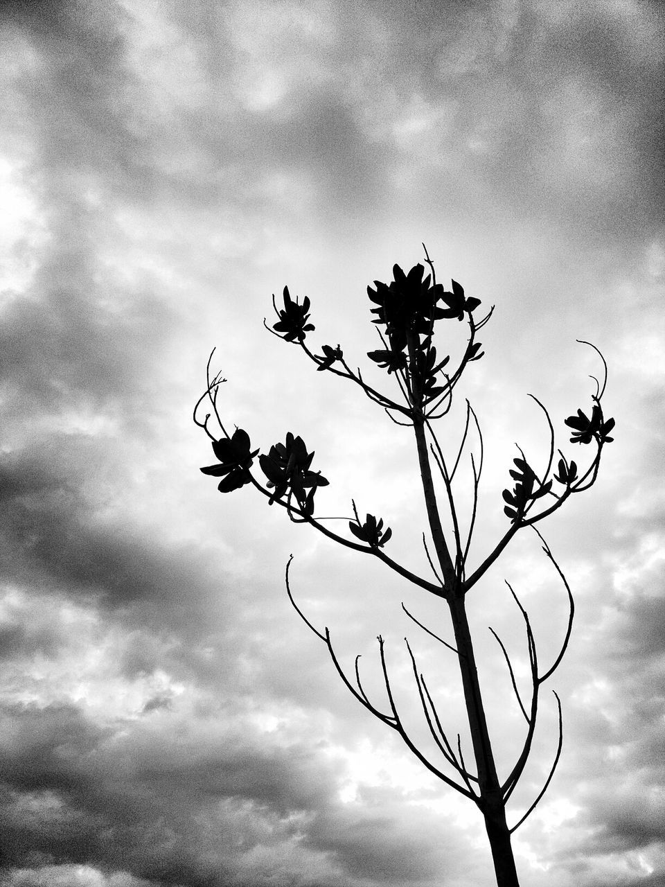 cloud - sky, sky, nature, low angle view, growth, beauty in nature, no people, flower, outdoors, day, plant, tree, fragility, freshness, close-up, flower head