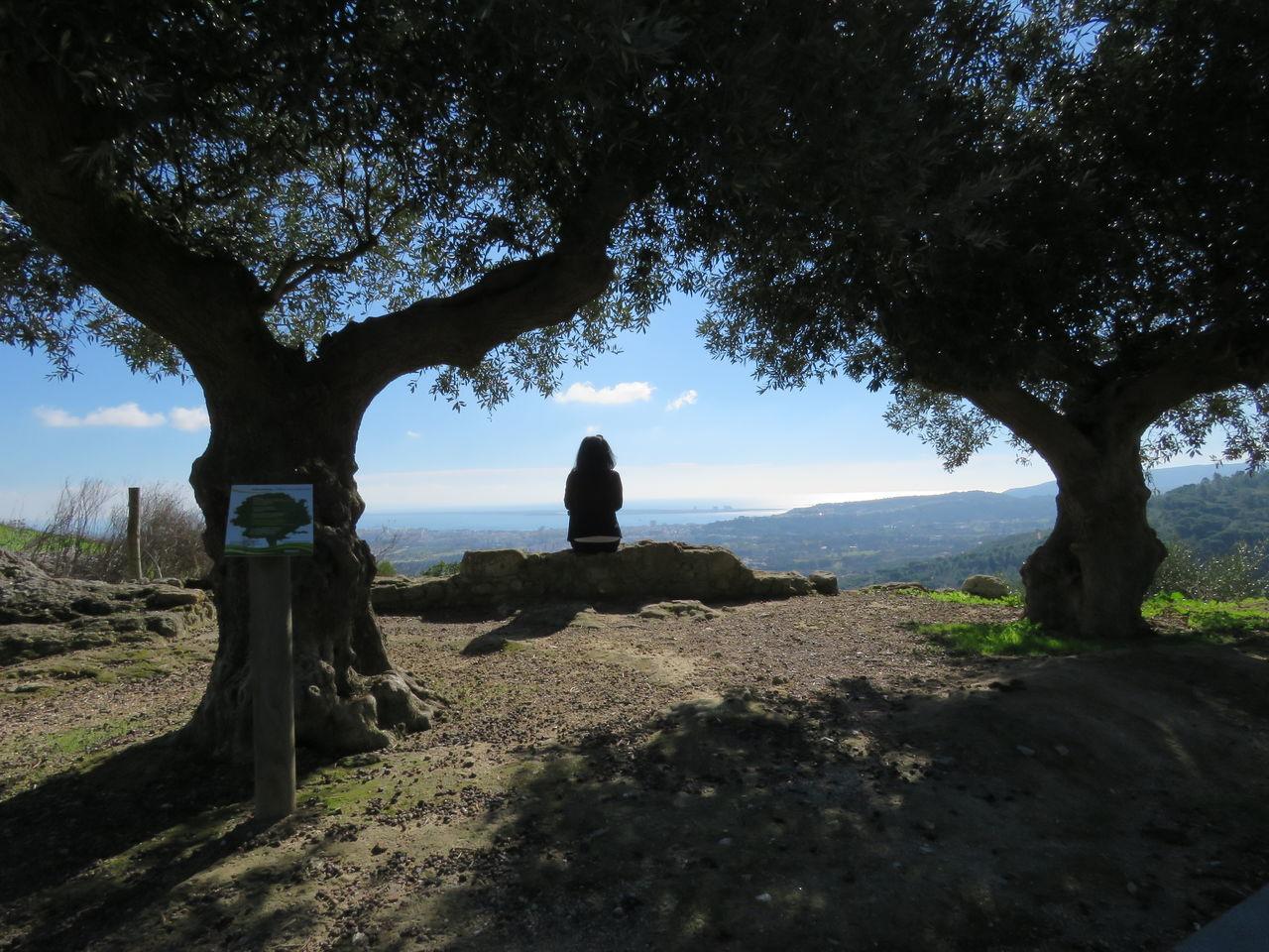 Beautiful View Beauty In Nature Day Girl With Green Jacket Growth Landscape Nature Olive Tree Outdoors People Real People Rear View Relaxing Moments Scenics Sightseeing Sitting Sitting Alone Sitting Outside What Who Where Enjoy The New Normal Tranquil Scene Tranquility Tree Woman Young Woman
