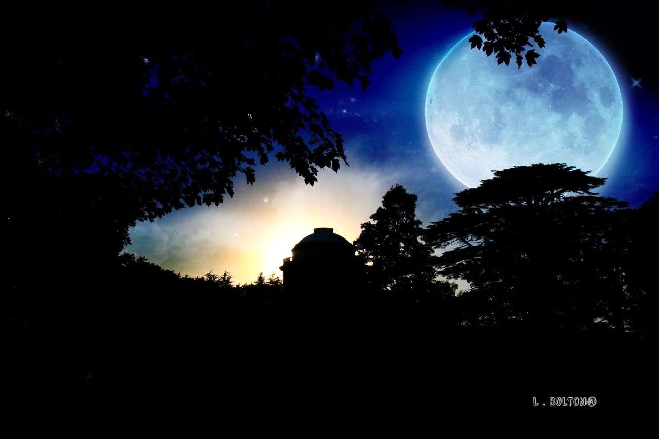 Silhouette Tree Night Beauty In Nature Nature Low Angle View Sky Moon No People Outdoors Astronomy Solar Eclipse Edited My Way Sky_collection Majestic Canonphotography EyeEm Best Shots Mausoleum Beauty In Nature